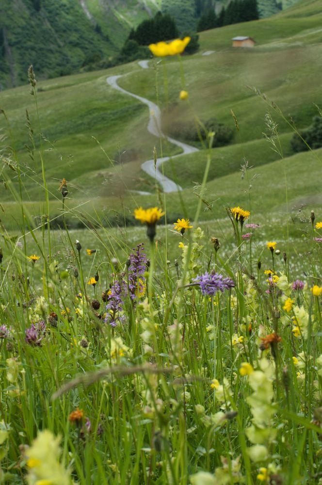 Blumenwiesen auf der Lechschleife nach Bürstegg