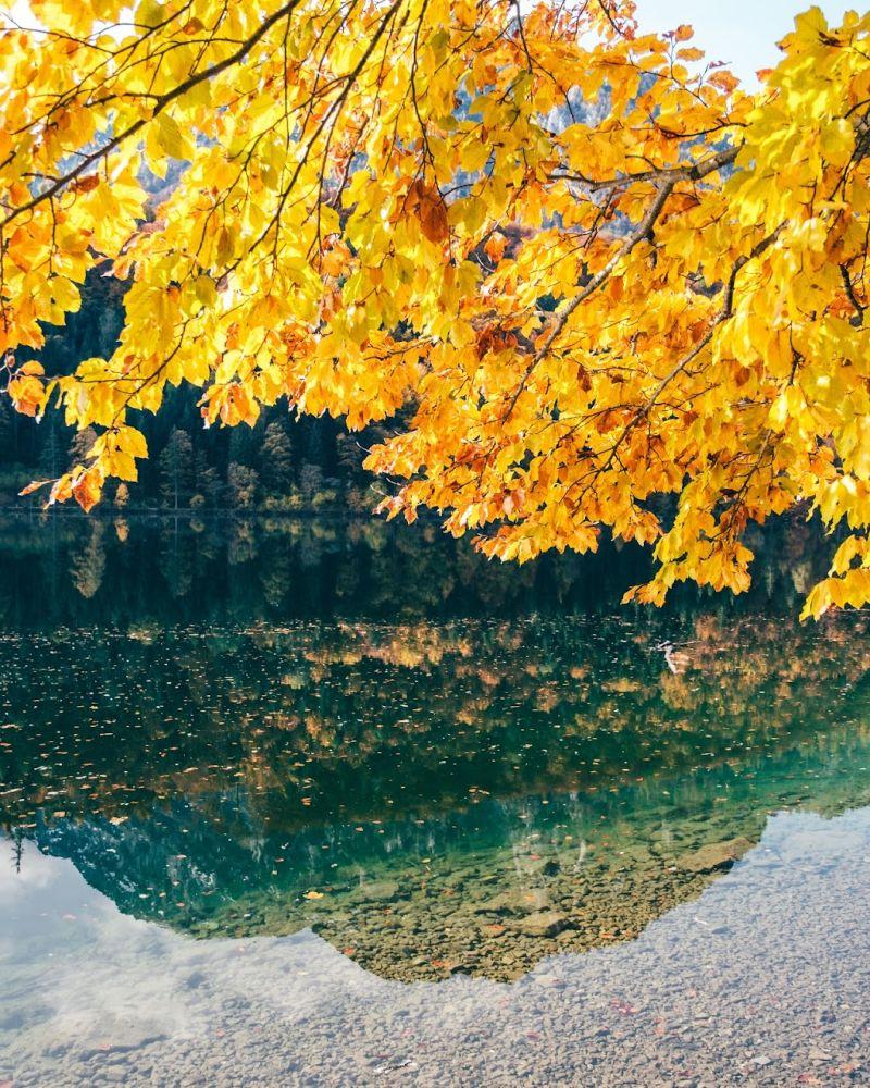 Malerisch gelb leuchten die Blätter hier im Herbst