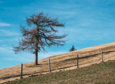 ÖSTERREICH: Wo das Wandern im Herbst in der Steiermark am schönsten ist