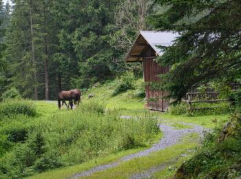 Lechweg 🥾 5. Etappe: Meine Erfahrung zwischen Elbigenalp und Stanzach
