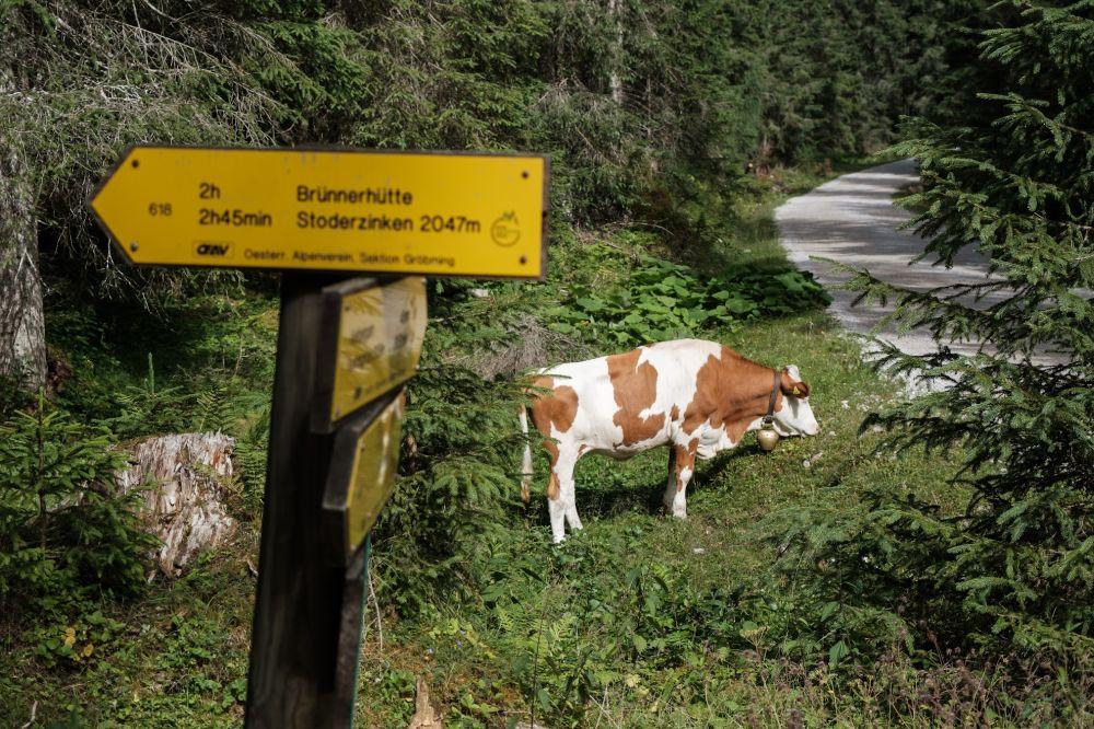 Wanderweg zum Stoderzinken von Gröbming aus
