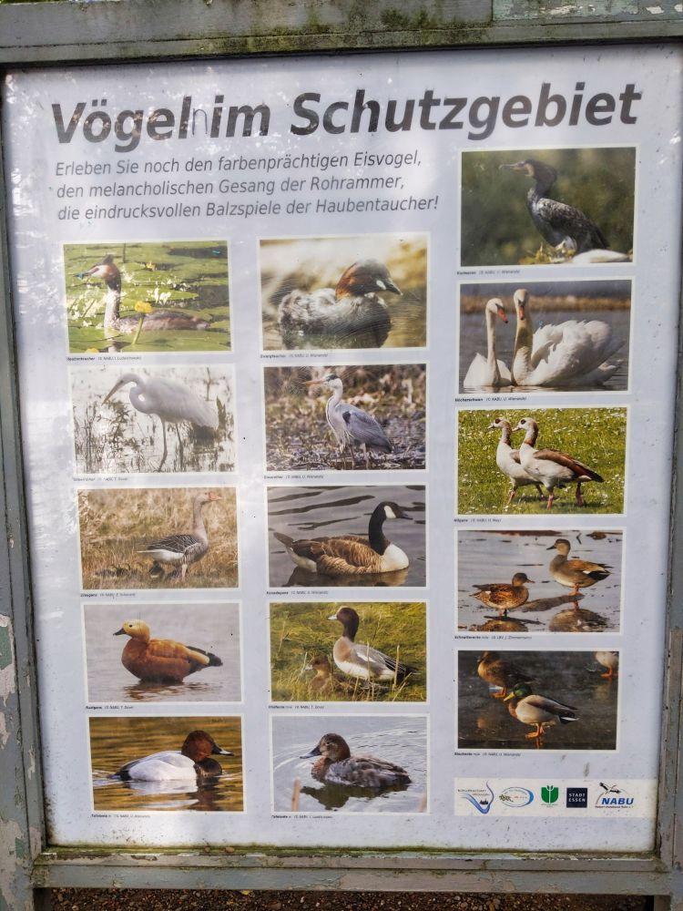 Sogar den Eisvogel kann man mit viel Glück am Baldeneysee finden